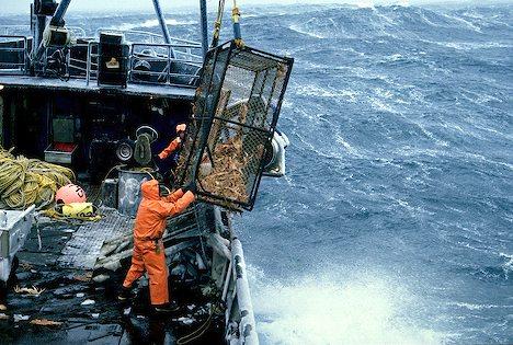 Fishing Jobs Alaska on Alaska  Commercial Fishing  Deck Crew Members Bring A Crab Pot On